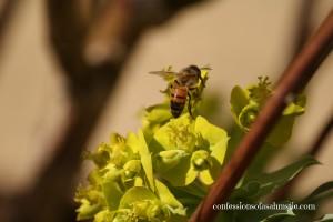 Bee w Flower 2